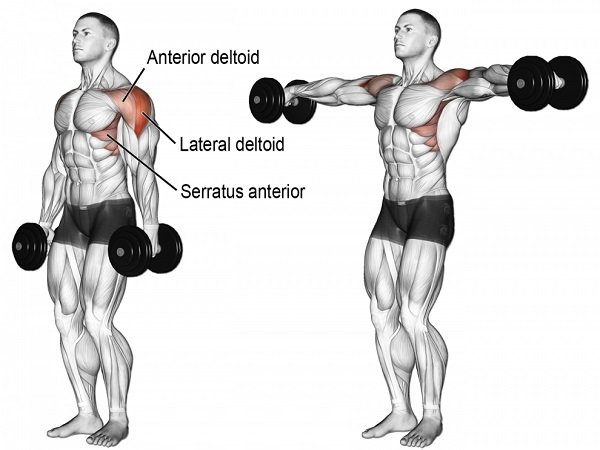 Dumbbell lateral raise